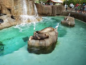 Photo: Otter Outlook