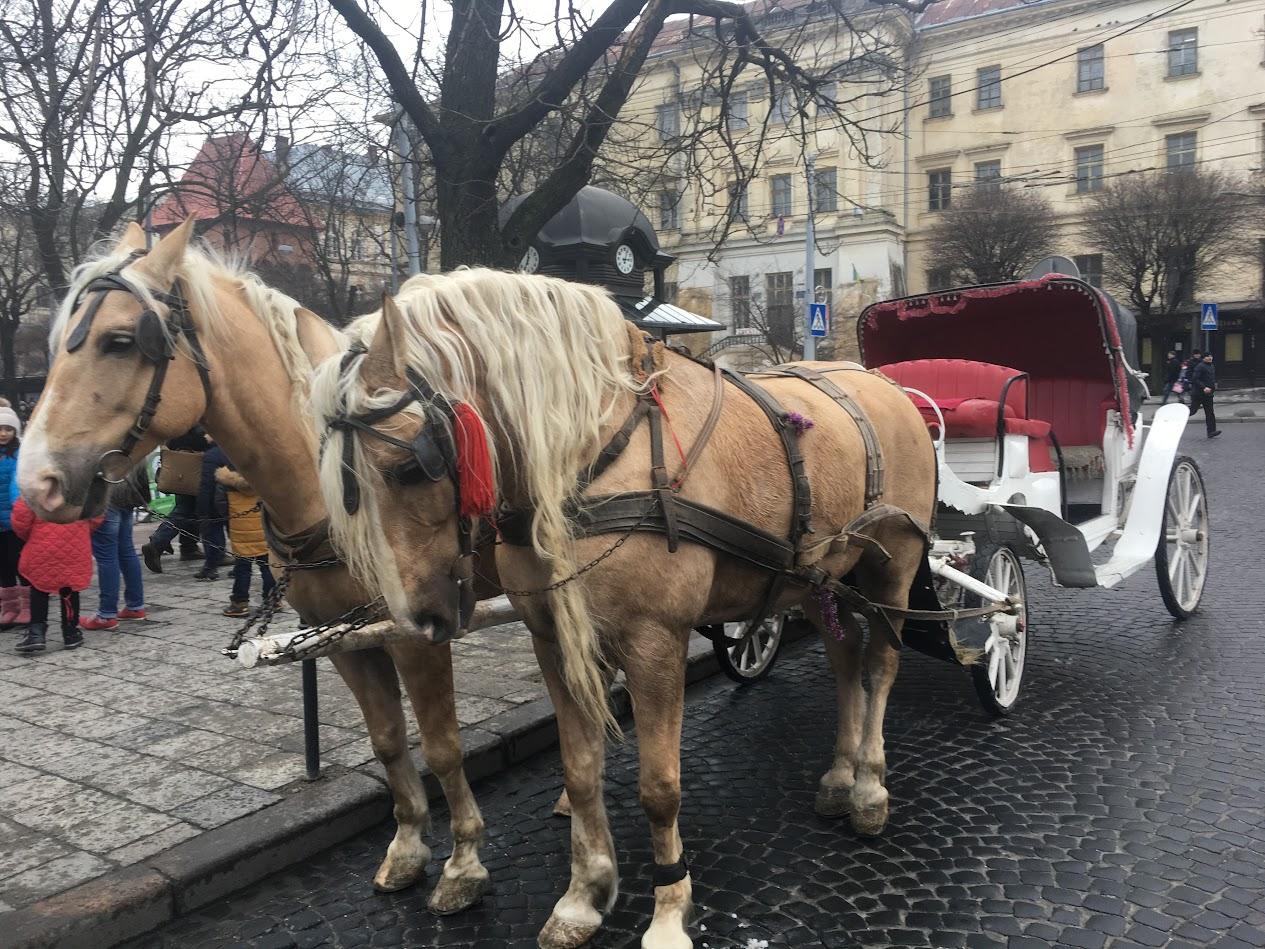 Lviv Fayton