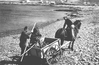 Photo: A wagonload of fish