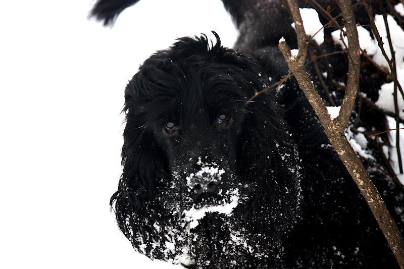 amo la neve di MONINIK73