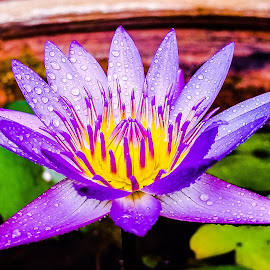 by Rudesphere Corminal - Flowers Flowers in the Wild