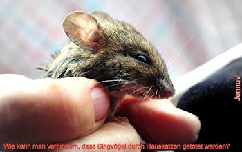 Photo: Maus nach Katzenattacke
