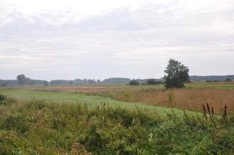 Photo: Przez mazowieckie łąki