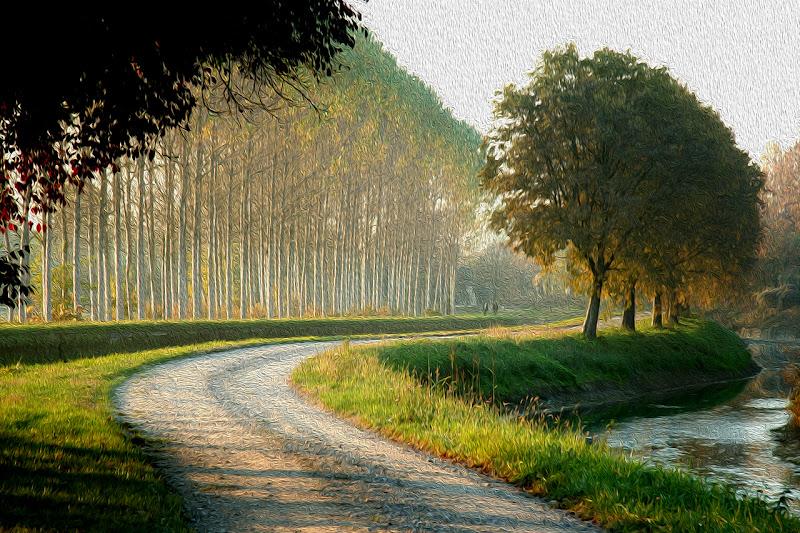 sentiero tra i campi di alber52