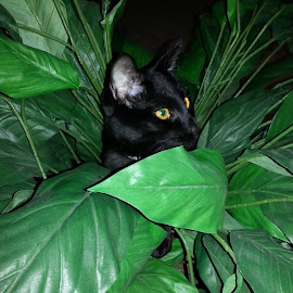 Lost in the Jungle by Terri Durden - Animals - Cats Playing ( cat, hiding, jungle, cute, black cat )