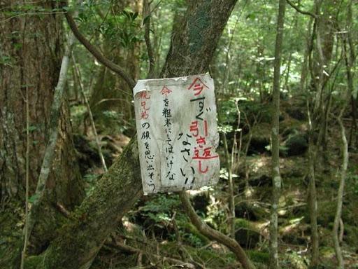 El bosque d elos suicidas en Japon