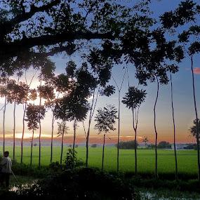 Sunset by Anupam De - Landscapes Sunsets & Sunrises