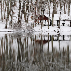 Peaceful Reflections  by H Scott Burd - Landscapes Forests ( wintertime reflections snow water lake state park )