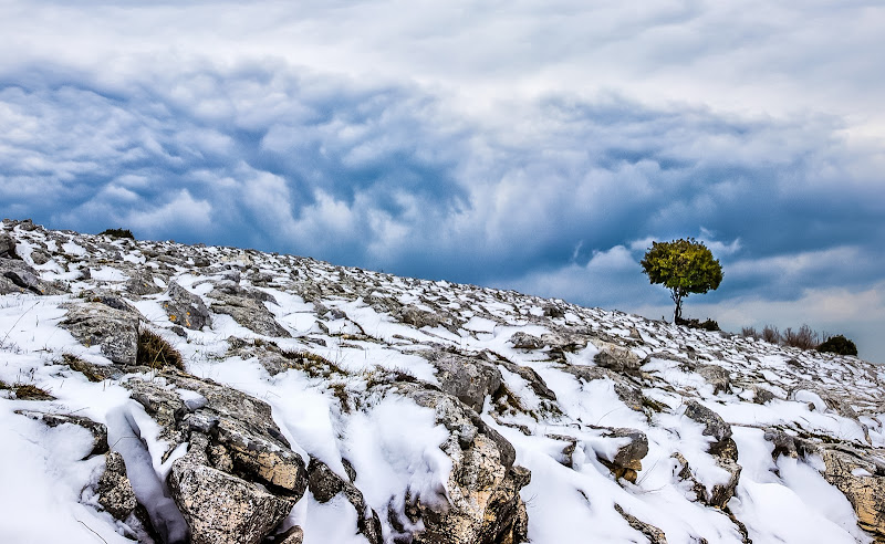The lonely Tree di marco la torre