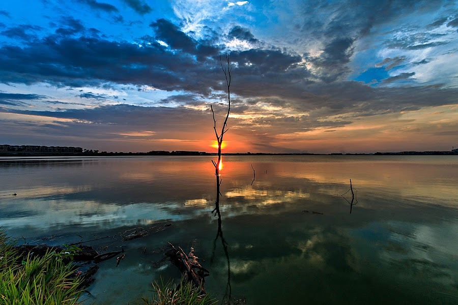 Sunset with Dead Tree by Jali Razali - Landscapes Waterscapes