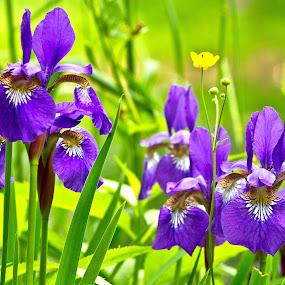 Purple Pleasure by Reva Fuhrman - Flowers Flowers in the Wild ( purple flowers greenery  summer rural colorful,  )