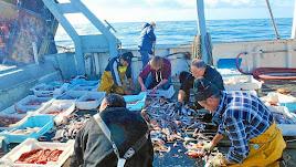 Los turistas podrán participar a bordo en las tareas marineras