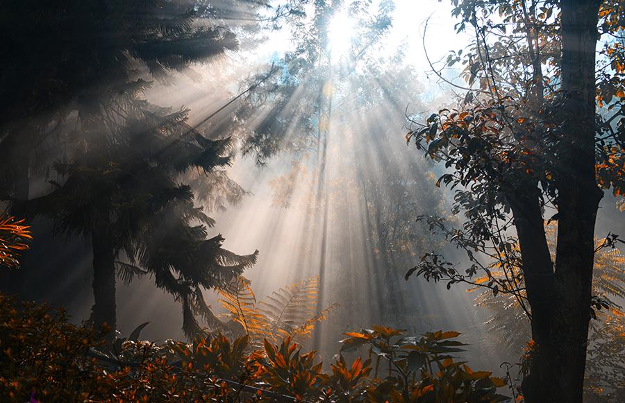 by Hendy Leonardo - Landscapes Forests ( pwcsunbeams )
