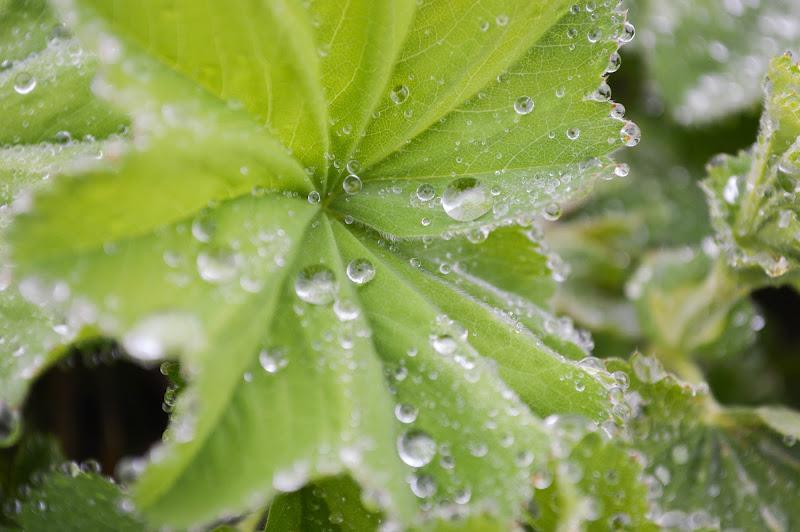 Dalle tremule foglie, bagnate di rugiada, ho bevuto profumo, felicità, pace... di coriele_francesca