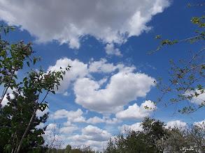 Photo: ágak között a felhő