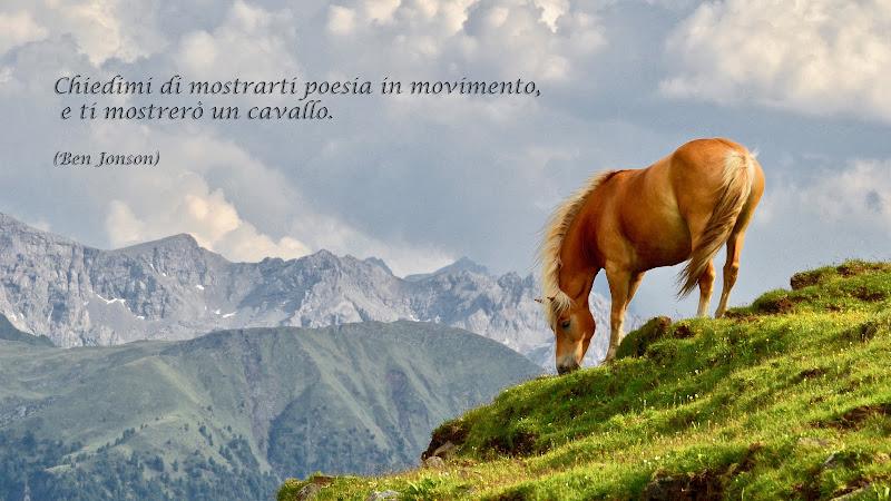Horse di giuseppedangelo