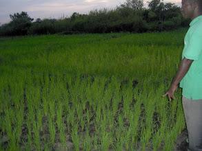 Photo: NGO Graphe, 2011. Photo courtesy of Jean Apedoh.