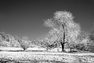 Photo: 'The Magic Tree'  (Clive Haynes _1151)