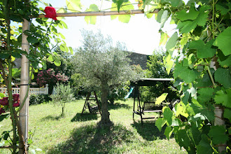 Photo: Evening Drinks on 3 Swinging Garden Chairs - 250 year old olive tree in attendance.