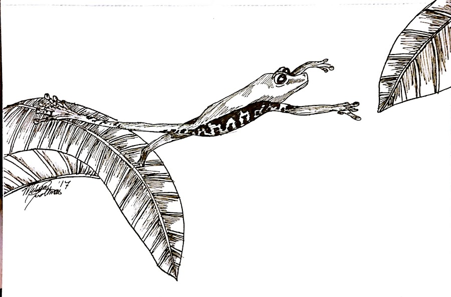 Jump by Melissa Toothman - Drawing All Drawing ( red eyed, frog, leaves, natural, reach, tree frog, jump )