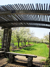 Photo: Bench under a gazebo at the end of the blossoming Apple Alley in Cox Arboretum in Dayton, Ohio.