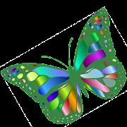Butterflies:Encyclopedia.Description,Photo,Offline