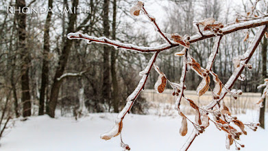 Photo: Some trees still hanging on to their dying leaves, and ice all over it. :)