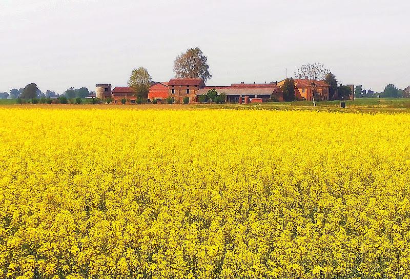 yellow landscape di Inazur