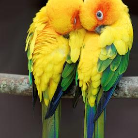 by Zdenka Rosecka - Animals Birds (  )