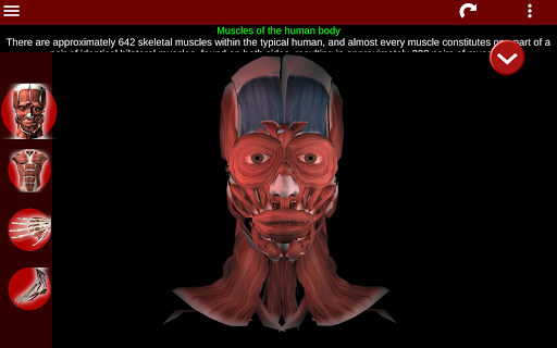 Muscular System 3D (anatomy) 2.0.8 Screenshots 9