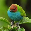 Beautiful Bird Live Wallpaper APK