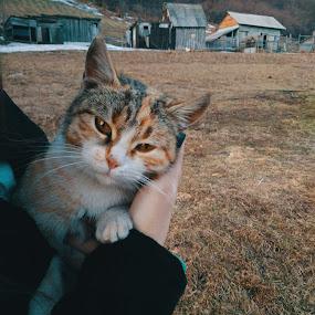 Serious one by Anja Popov - Uncategorized All Uncategorized ( cats, cat, village, sharp, lanscape )