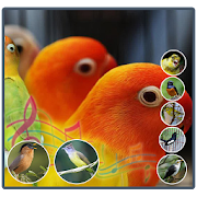 Ringtone Suara Burung