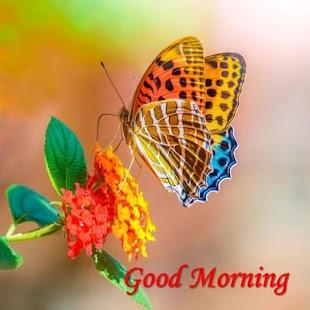 Dobré ráno a dobrou noc - náhled