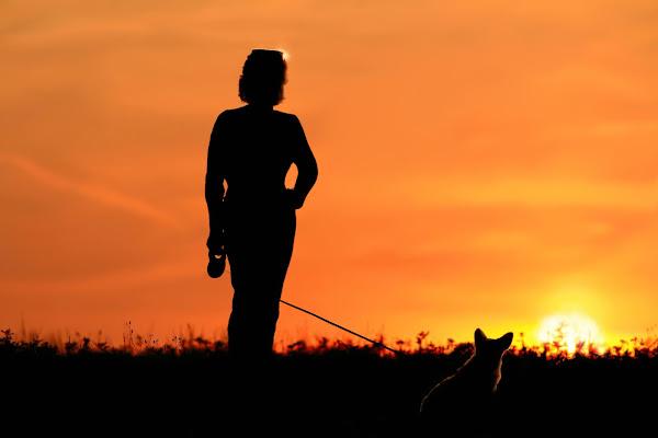 al tramonto di filippetti livio
