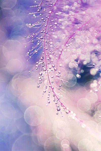 عکاسی هنری عکاسی از گل