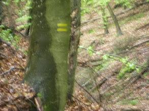 Photo: Wąwóz do Doliny Świemirowskiej - znak szlaku jeszcze nie kompletny.