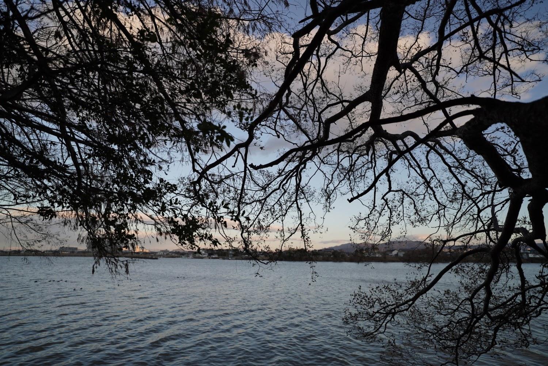 木の影からみる湖
