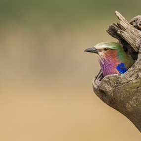 No place like home by Lourens Lee Wildlife Photography - Animals Birds ( animals, nature, lourens lee, birds )