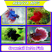Crowntail Betta Fish icon