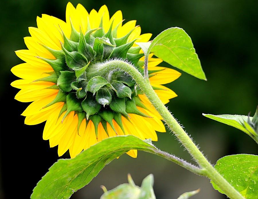 by Vijay Singh - Flowers Single Flower