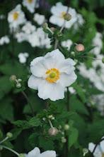 Photo: Gardens at Birr