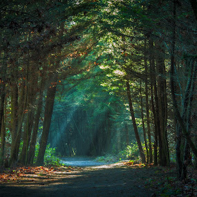 Rays of Sunlight by Garry Dosa - Landscapes Forests ( winter, cold, january, outdoors, forest, sunray, sunlight, colours,  )