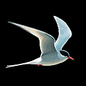 Collins Bird Guide icon