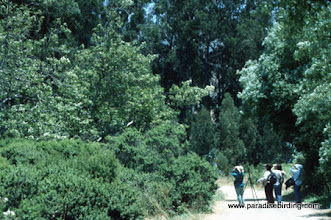 Photo: Birders enjoying one of Monterey County's hottest hotspots, Andrew Molera State Park.