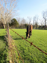 Photo: Horse grazing behind barbed wire at Carriage Hill Metropark in Dayton, Ohio.