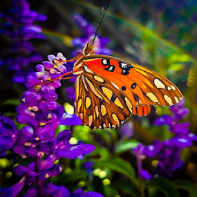 Gulf Fritillary Butterfly by Anne LiConti - Instagram & Mobile Android ( #mobilephotography, #phonephoto, #mobilephoto, #mobile, #gulffritillary, #instagram, #butterflygarden, #visitor, #butterfly, #phonephotography,  )
