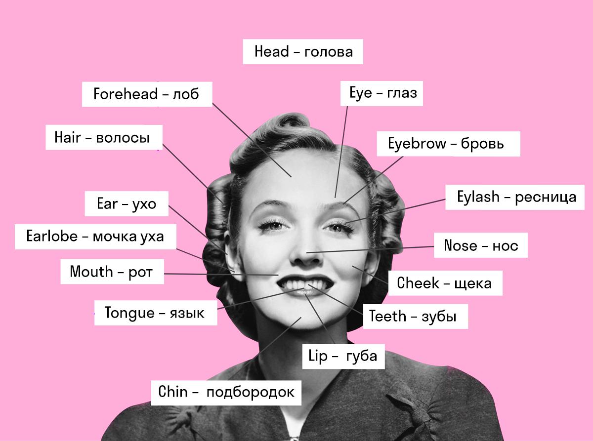 названия частей лица в английском