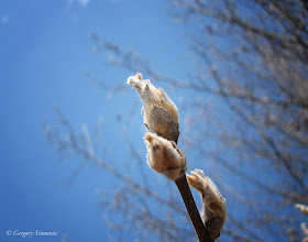 Photo: February 21, 2012 - Spring is Coming #creative366project