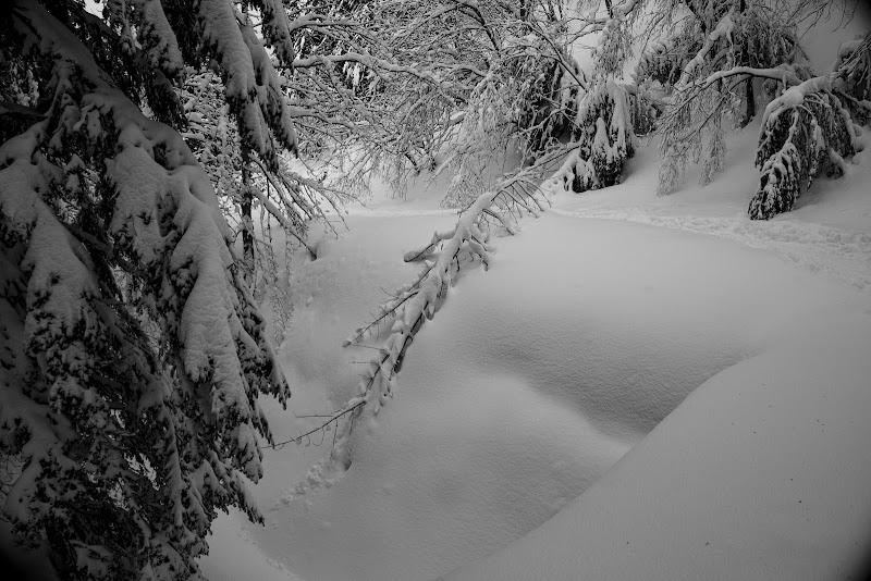 neve fresca di babons